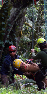 Aerial Rescue image for tree worker injured
