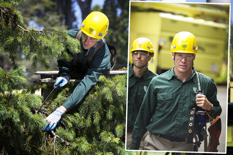 Picture shwoing corporate tree care employees enagaged in tree climbing and tree care using tree gear purchased at WesSpur